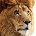 OS X 10.7 Lion